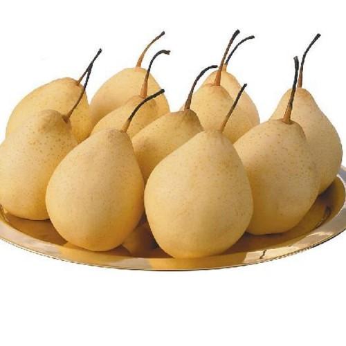 富光果业有限公司  专业种植各种水果 果树销售  晚秋黄梨 砀山梨