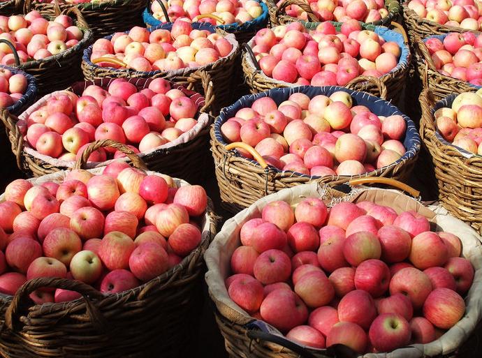山东红富士苹果价格膜袋苹果