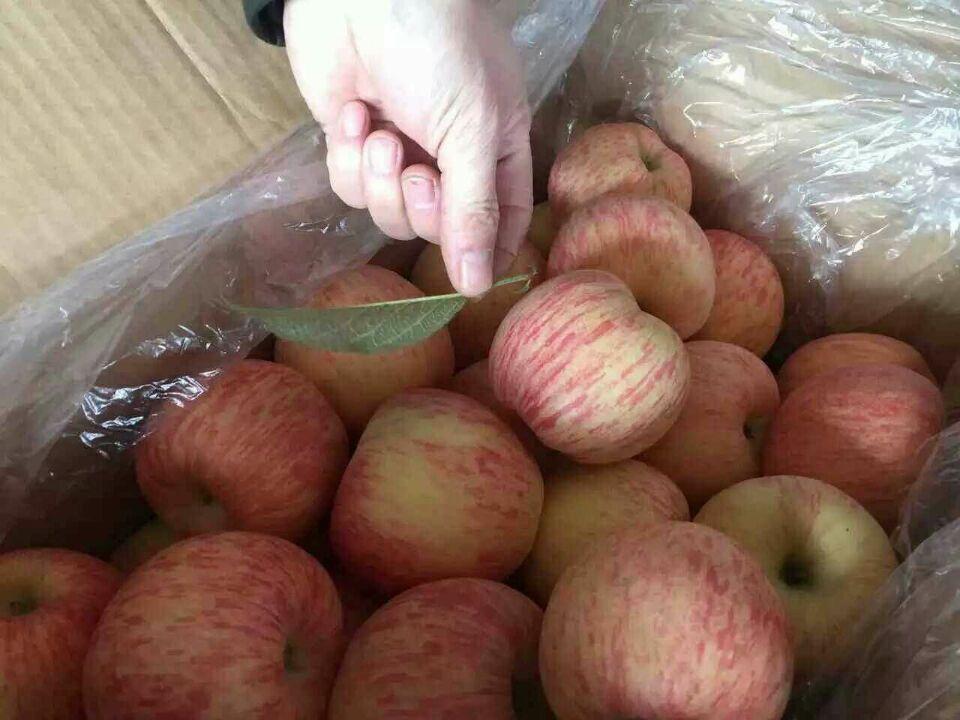 山东苹果价格红富士苹果价格