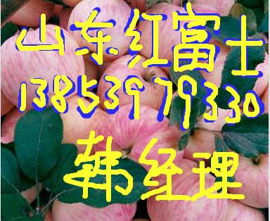 山东苹果价格膜袋红富士苹果价格