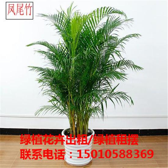北京花木绿植盆栽出租公司 北京花木绿植盆栽出租供应商