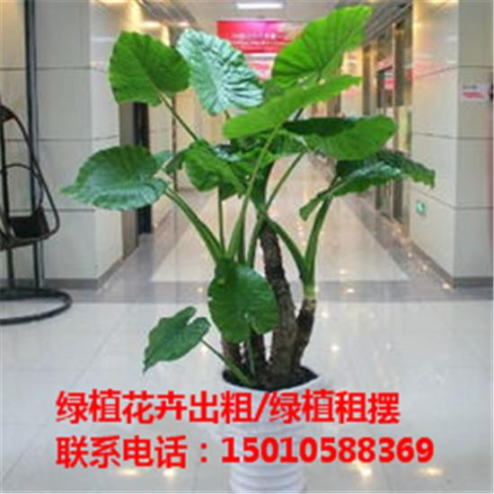 北京水培绿植花卉租赁公司 北京水培绿植花卉租赁供应商