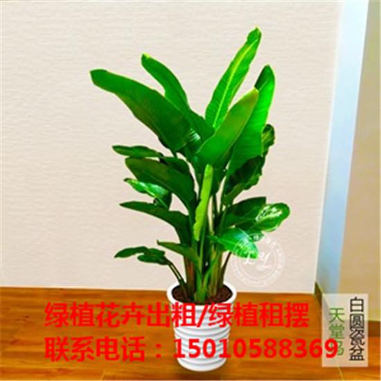北京大型绿植花卉租摆公司 北京大型绿植花卉租摆供应商