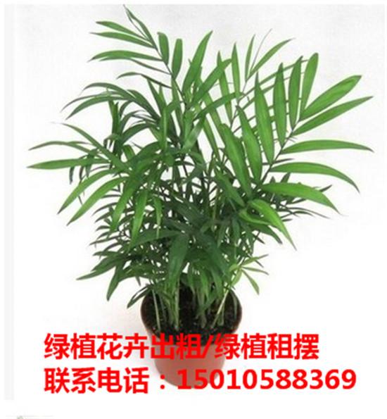 北京大型绿植花卉租摆供应商 北京大型绿植花卉租摆公司